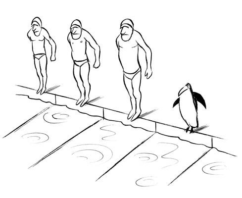 Chaval - pingouin-piscine